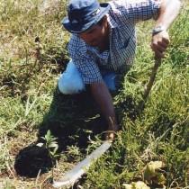 Forstmann Warner hält mit einer Machete eine Pflanzstelle frei