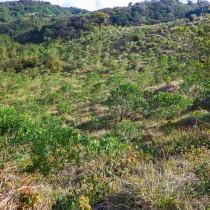 Wiederbewaldung mit El Dama- und Kartoffelbäumen